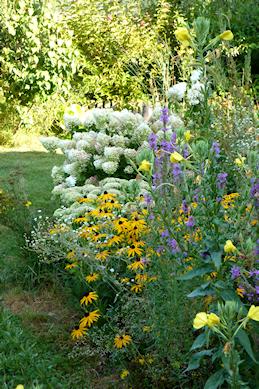 Die Nachtkerze bildet Blüten und bald essbare Samen, die man ernten kann.