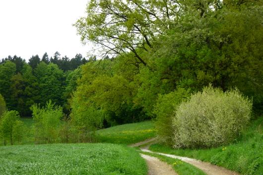 Wildobst findet man in der Natur in Hecken, entlang von Feldgehölzen und im Garten.