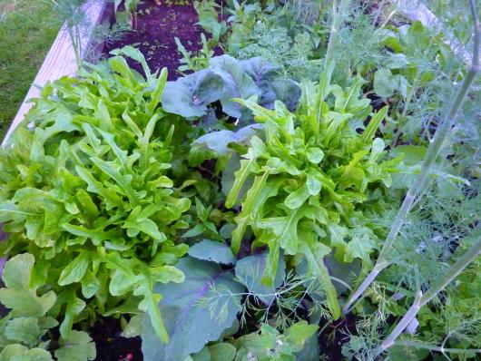Das Gemüsebeet ist voll. Deshalb will ich ein neues Gemüsebeet anlegen.
