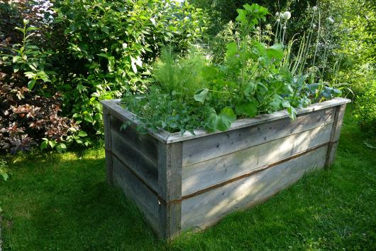 Hochbeete im Garten sind nützlich gegen Wühlmäuse und Schnecken.