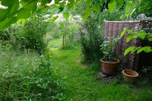 Ideen für den kleinen Gemüsegarten: Gemüse im Topf