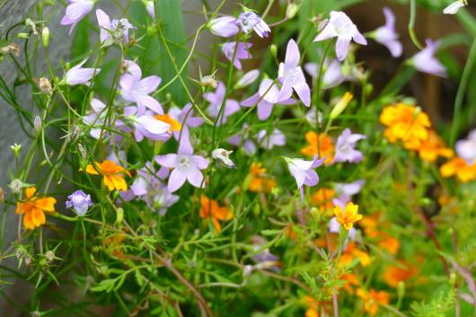 Blumen und Wildpflanzen im Hochbeet beim Gemüse.