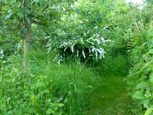 Wiese im Naturgarten